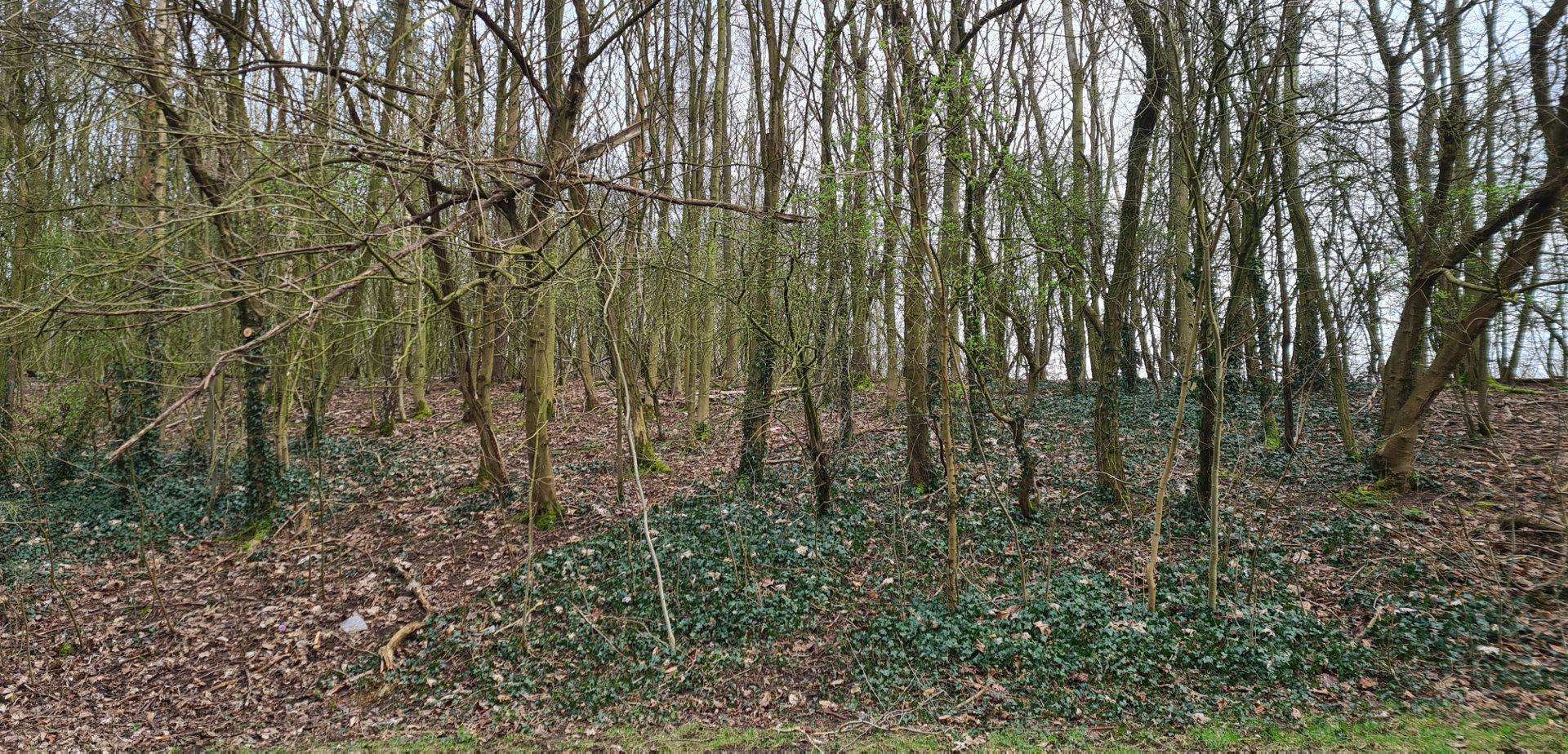 Broxtowe Park